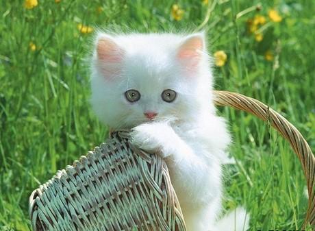 tai-hinh-anh-de-thuong-cute-lam-avatar-social-network (117)