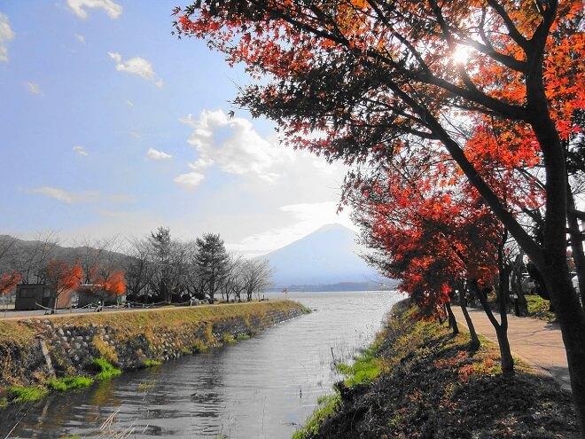 Sông Sagami và hồ Kawaguchi với núi Phú Sĩ ở phía sau, vào mùa thu.