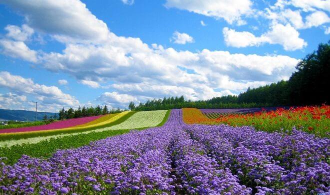 Tài nguyên thiên nhiên Nhật Bản