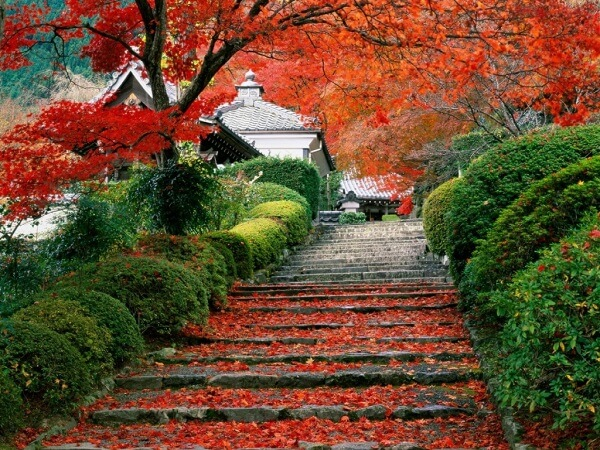 Cảnh đẹp Nhật Bản mùa thu