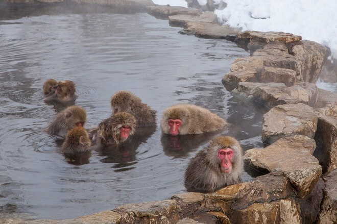 Công viên Khỉ Jigokudani