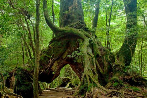 Rừng nguyên sinh Kasugayama
