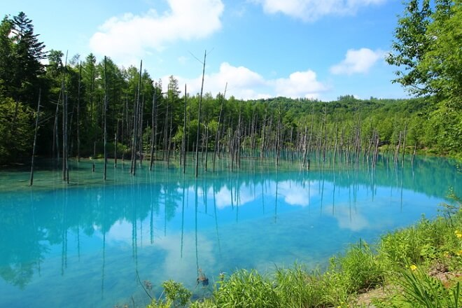 Công viên tự nhiên Furano-Ashibetsu
